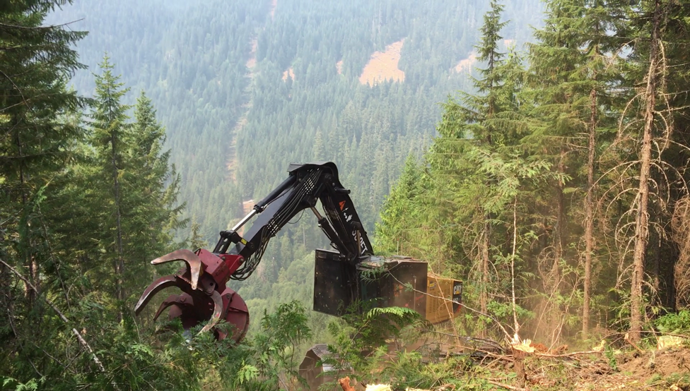 Steep-slope logging